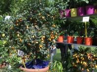 Il giardino degli agrumi