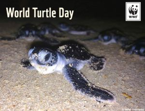 foto©WWF-Turtle Day 2013
