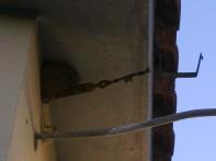 un altro nido