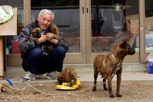 Il signor Naoto Matsumura mentre dà da mangiare ad alcuni cani