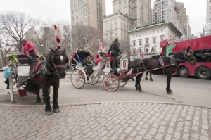 End of Horse-Drawn Carriage Industry in New York