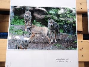 Libro e mostra fotografica