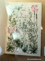Fenaroli, Flora Alpina, 1932