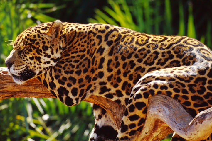 Qual 39 e 39 l 39 importanza delle foreste pluviali terraria - Gli animali della foresta pluviale di daintree ...