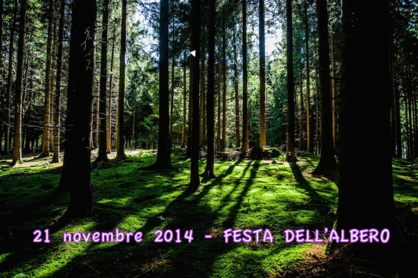 festa_albero2014
