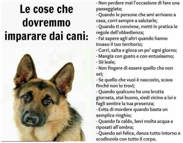 cose da imparare dai cani