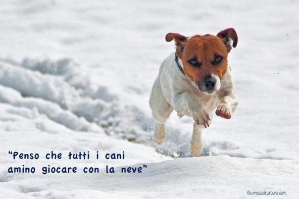 cane_nella_neve