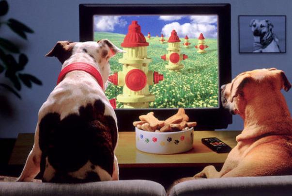 spot cani gatti tv
