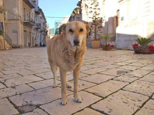 Italo il cane di Scicli