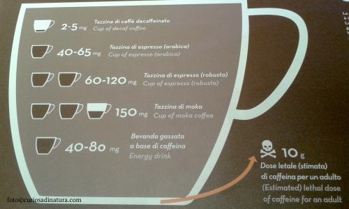 tazzina_caffeina