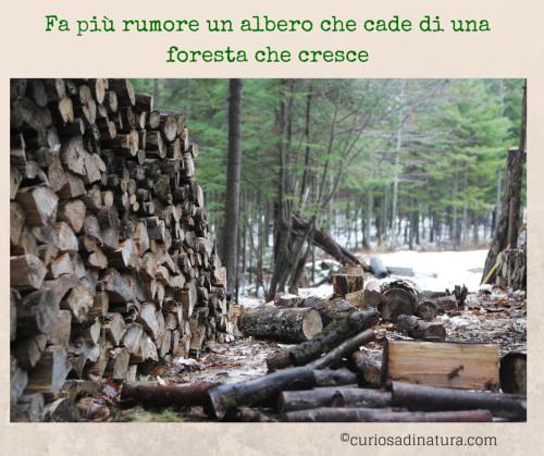 albero_ foresta