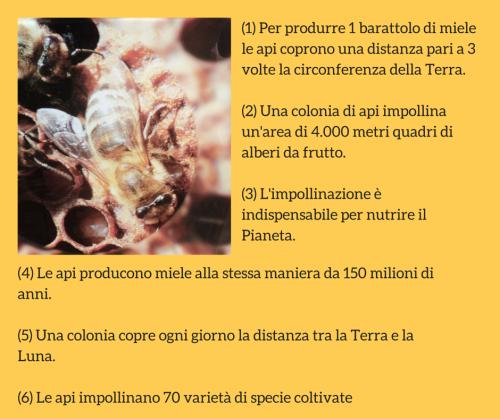 info_api