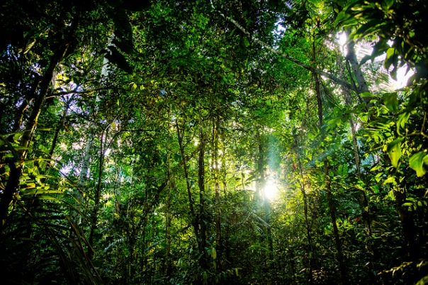 foresta_amazzonica