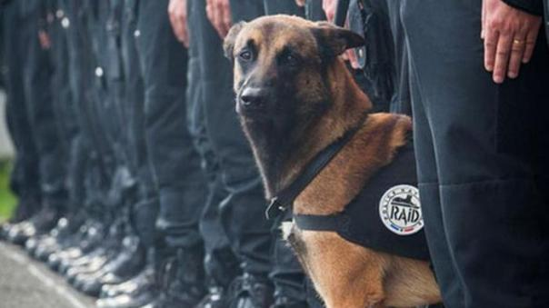 diesel_cane_poliziotto_@LaStampa.it