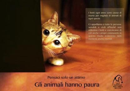 Anche i gatti hanno paura - campagna Lega Nazione per la Difesa del Cane