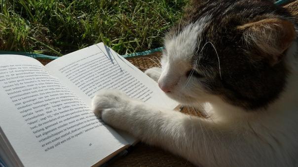 gatto_e_libro