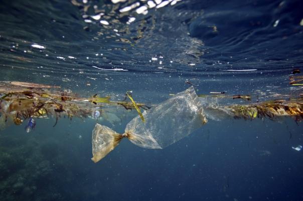 La plastica nei mari e negli oceani (foto Plastic bag floating underwater at Pulau Bunaken)