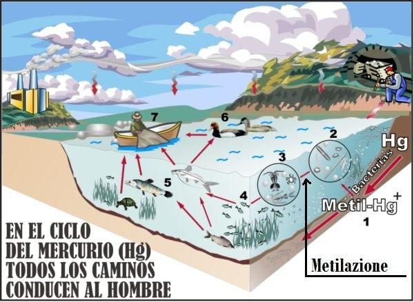 ciclo mercurio