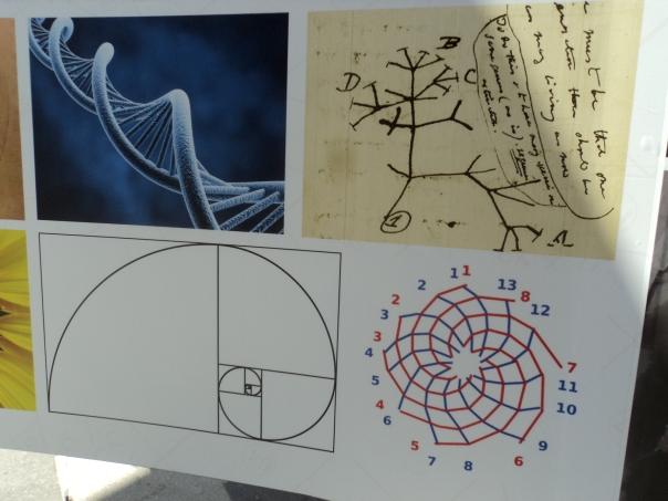 Fibonacci_alberovita.JPG