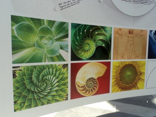 Fibonacci_botanica