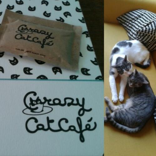 crazy_cat_cafè_1