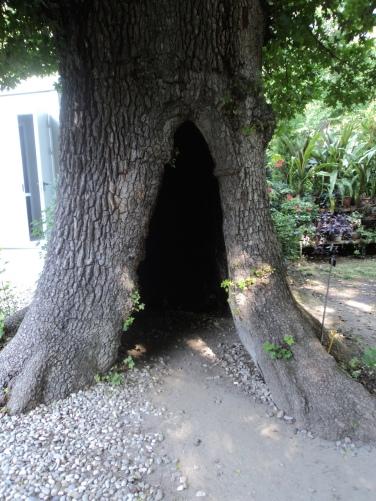 albero di una certa età