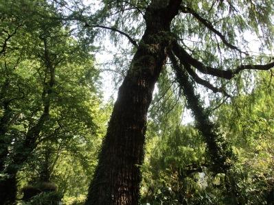 bosco golenale