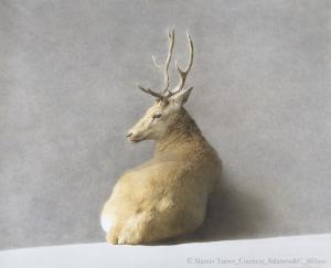 © Marzio Tamer, Grande cervo, cm 120 x 160 Courtesy Salamon&C. Milano