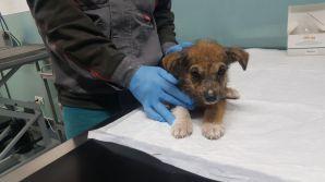 Prime visite dal veterinario