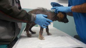 In cura dal veterinario