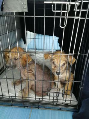 Naomi e Claudia in viaggio verso il canile di Save The Dogs
