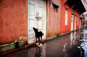 INDIA-10221© Steve McCurry