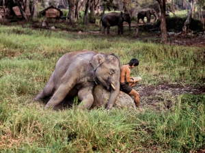 THAILAND-10033_web© Steve McCurry