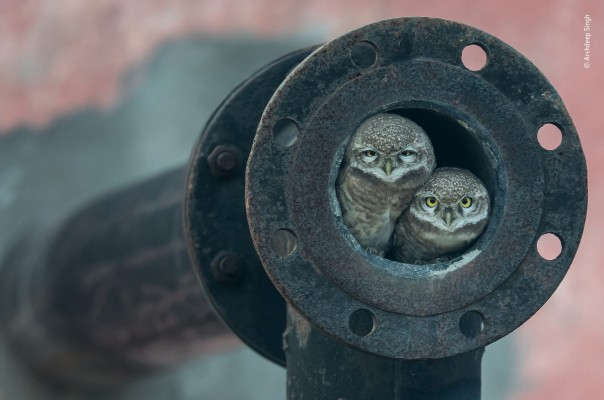01 © Arshdeep Singh - Wildlife Photographer of the Year