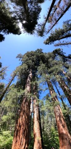 Come fotografare gli alberi - foto©MenteNomade