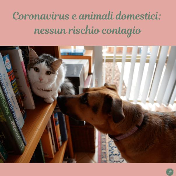 Coronavirus e animali domestici: nessun rischio contagio