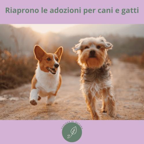 Riaprono le adozioni per cani e gatti